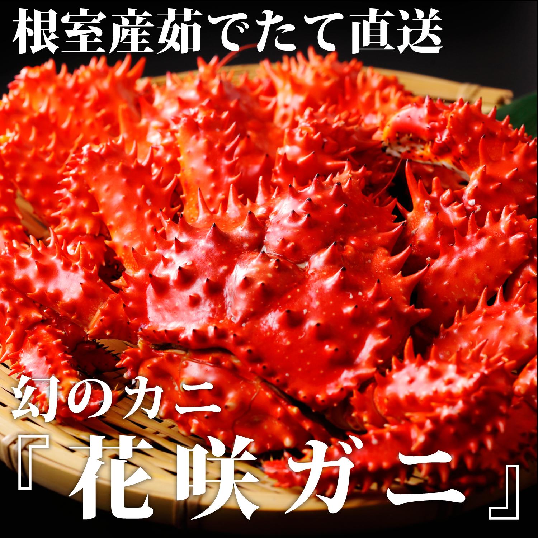 北海道根室産 幻のカニ 花咲ガニ